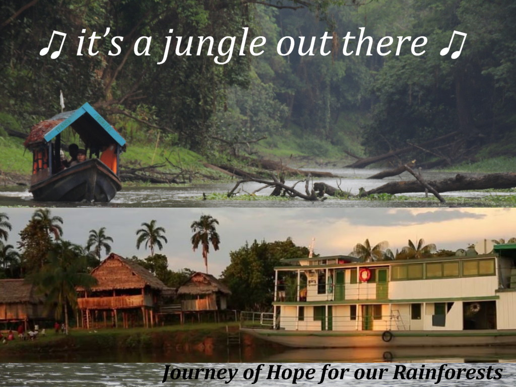 Hope for the rainforest